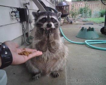 Удивительные фотографии животных. Такого Вы еще не видели