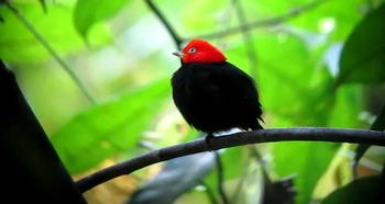 10 нестандартных брачных ритуалов птиц