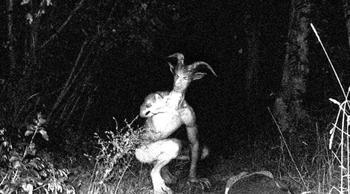 7 шокирующих фотографий неизвестных науке созданий