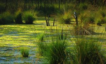 Череповецкое болото — пропавшие люди