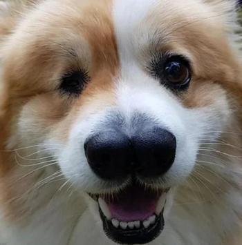 Пёсик с необычной внешностью, которого ветеринар не дал усыпить