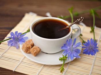Без кофеина: чем полезен цикорий