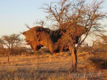 А вы знаете, что это за штуки на деревьях и почему они могут оставаться там столетиями?