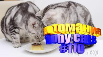 Смешные коты | Приколы с котами | Видео про котов | Котомания #110