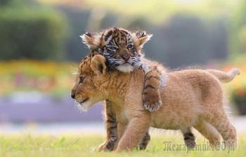 Милые фотографии детенышей животных