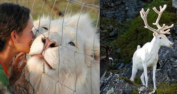 Удивительные животные-альбиносы: редкие и беззащитные