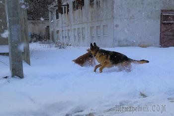 Весна пришла. Крым. Симферополь. Прогулка с Найком. 1-е марта