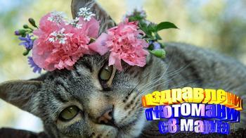 Поздравление с 8 марта от котомании.