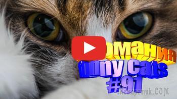 Смешные коты | Приколы с котами | Видео про котов | Котомания #91