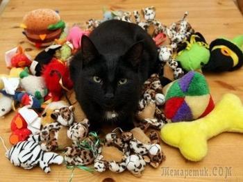 Коты-клептоманы и их коллекции: как стащить всё, что плохо лежит