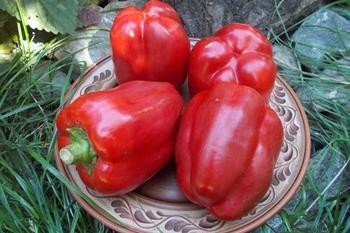 Перец Калифорнийское чудо: отличный урожай в открытом грунте