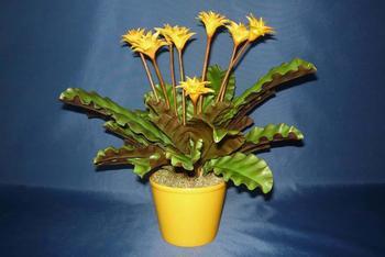 Популярные разновидности растения Калатеи