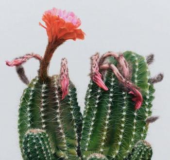 Реалистичные картины кактусов от корейского художника Ли Кван-хо