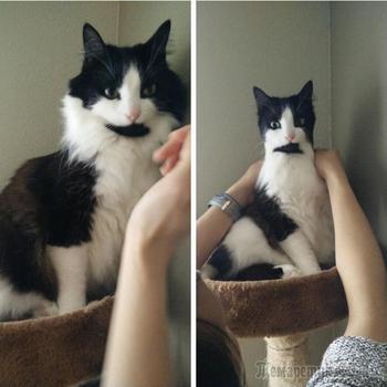 25 веселых кошачьих снимков, которые оставят вас с самой большой улыбкой на лице