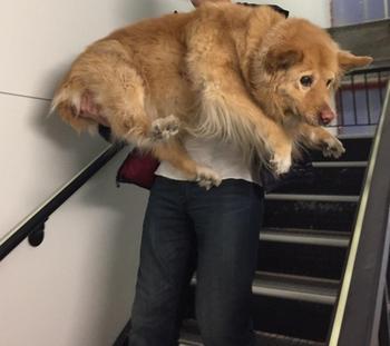 Фото о том, что собаки на самом деле остаются щенками на всю жизнь