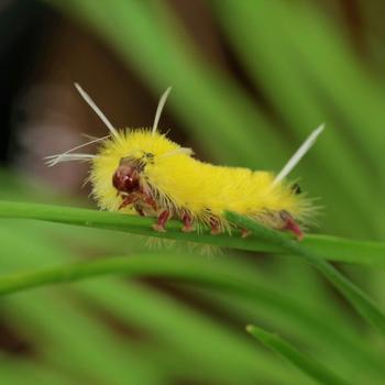 20 удивительных и прекрасных гусениц