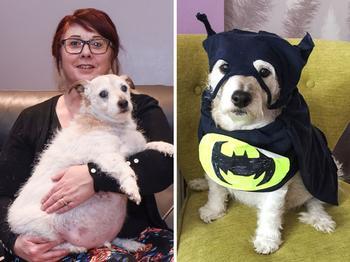 Невероятно толстый пес Руперт творит добро благодаря своему лишнему весу