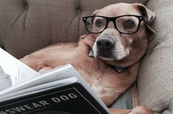 Возможно, вы не догадывались, но собаки тоже любят читать