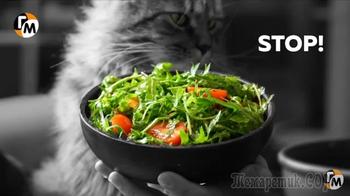 Салат с рукколой и секретной заправкой.