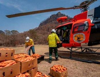 Австралия. Помощь животным во время пожара