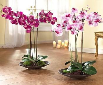 Что делать с орхидеей когда она отцвела