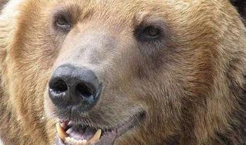 12-летний мальчик выжил после встречи с огромным медведем