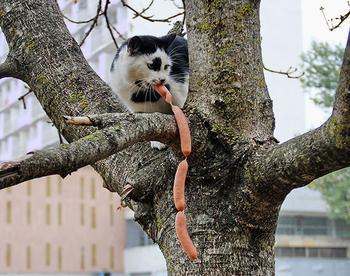Коты попались с поличным… Невероятно смешно!