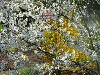 10 счастливых весенних примет