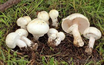 Как вырастить много грибов на даче