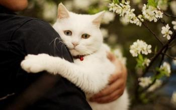 Как бабки спасали кота