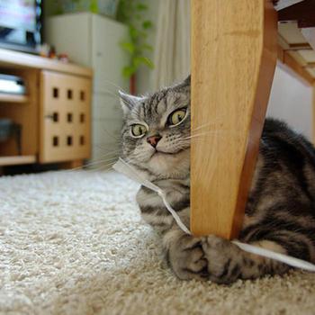 Эмоциональность кошек