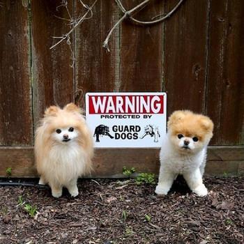 «Осторожно, злая собака»: 14 фотографий собак, которые выглядят слишком добрыми для того, чтобы их боялись