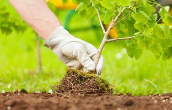 Как быстро и без проблем сформировать новый саженец от дерева