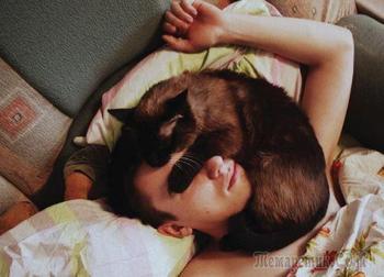 Жизнь с котом: ожидание против суровой реальности