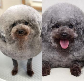 Японский грумер так очаровательно стрижёт собак, что вы не сможете сдержать улыбку