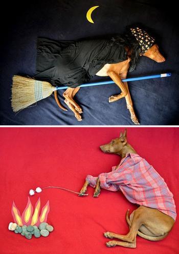 Креативные владельцы собак, которые делают для своих питомцев оригинальные вещи