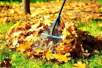 Чем обработать деревья осенью от болезней и вредителей