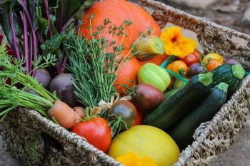 Правильное питание садовых и огородных культур — вопрос серьезный!