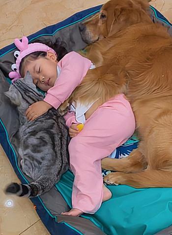 Маленькая девочка, которая укладывает спать пёсика и котика
