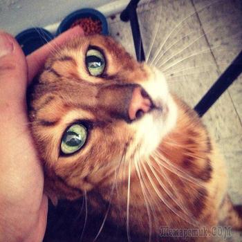 20 немолодых кошек, которые были взяты из приюта добрыми людьми