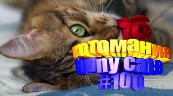 Смешные коты   Приколы с котами   Видео про котов   Котомания #100