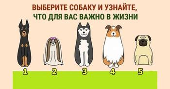 Выбери собаку и узнай свои жизненные ценности