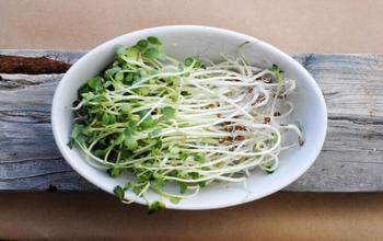 Проростки: мощный заряд питательных веществ в «компактной упаковке»