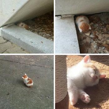 Животные, которые еще недавно были бездомными, а сейчас обрели любящую семью