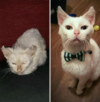 Фотографии кошек до и после того, как их спасли от бездомной жизни