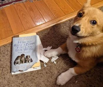 19 собак, пойманных на месте преступления, одним из которых стыдно, а у других нет и капли сожаления