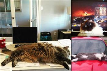 Я тут лежу, и не… волнует: 19 котов-мастеров бросить кости