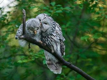 20 невероятно крутых сов, которые никого не оставят равнодушным