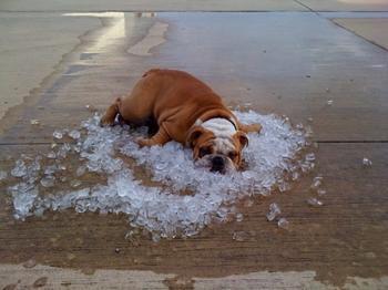 Как животные спасаются от жары. Эх, сейчас бы на их место...