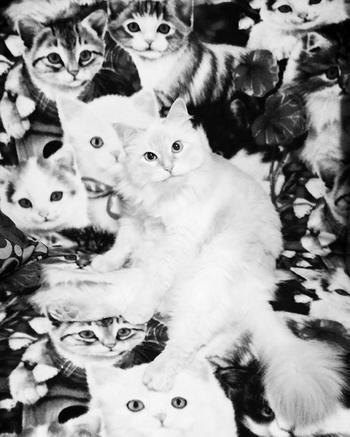Фото со спрятавшимися котами заставят вас поломать голову